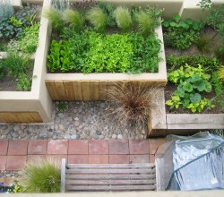 Urban Vegetable Garden